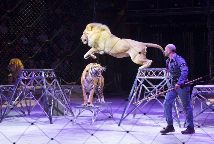 «Национальный цирк Египта» в Твери