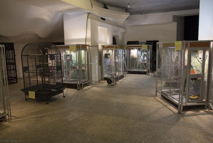 Выставка зоопарк экзотических животных в Твери