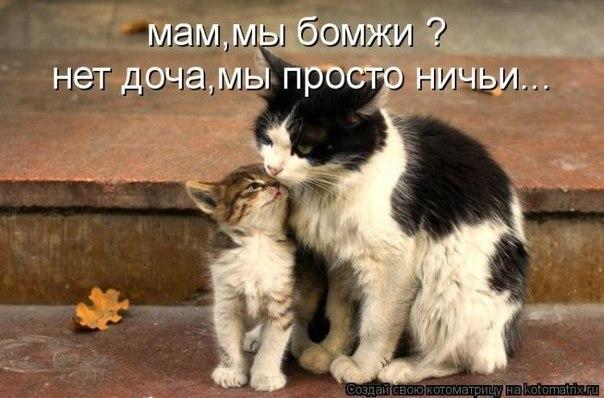 Скачать песню о любви к животным