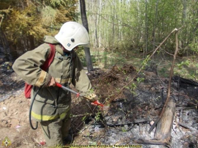 В Тверской области появились первые очаги лесных пожаров