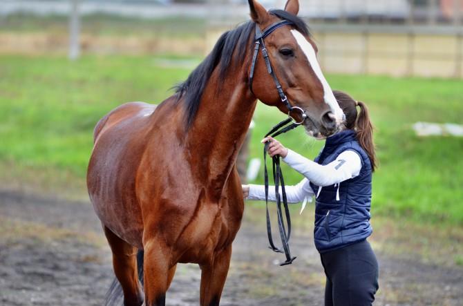 День лошади в Твери