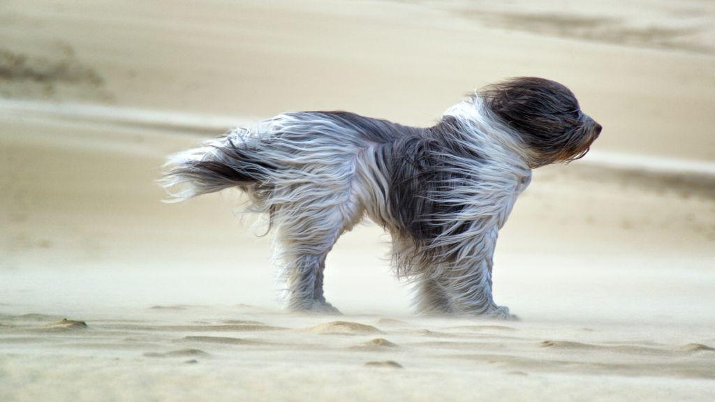 ВЯрославской области предполагается усиление ветра