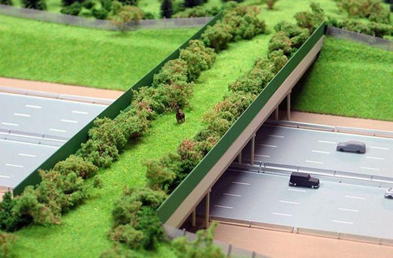 Экодук открылся на170км федеральной дороги М3 «Украина» вКалужской области