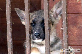 День домашних животных собака
