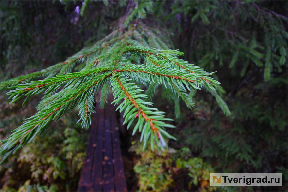 В рамках Всероссийской акции «Живи, лес!» в Тверской области будут заложены новые аллеи и скверы