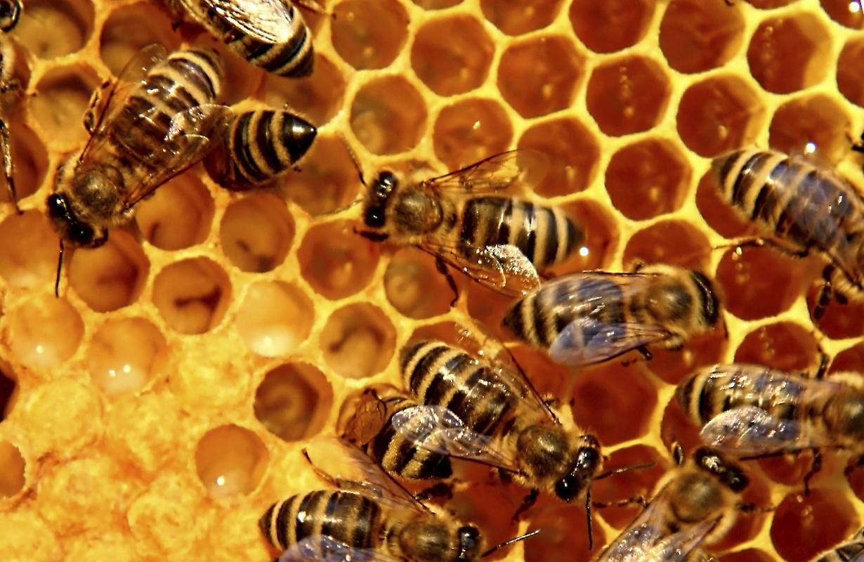 Тверским пчеловодам предлагают собраться на встречу в библиотеке