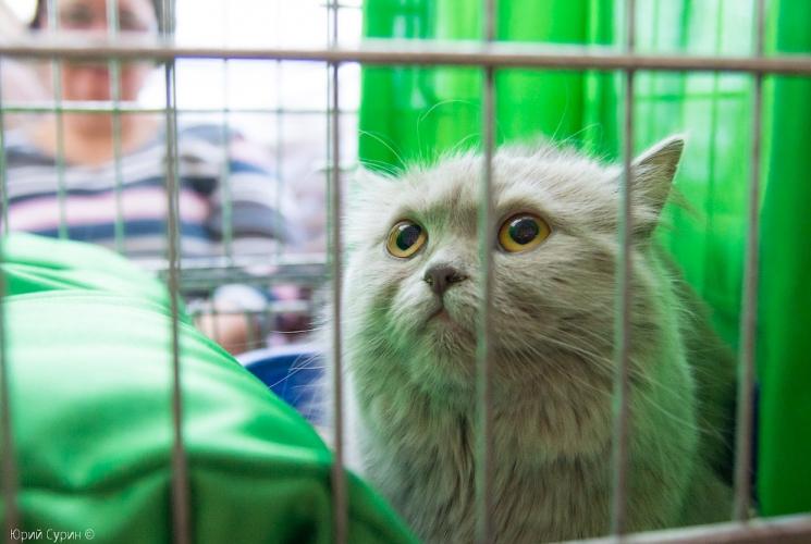 выставка кошек в Твери 2013