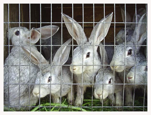 Кролики здоровы!