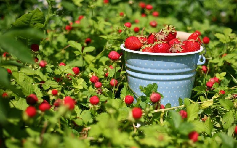Садовые дела июнь
