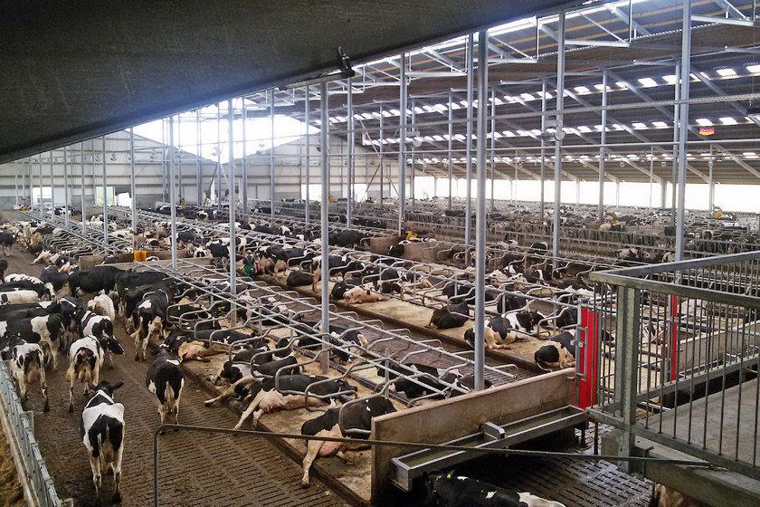 вывешивает доске как построить бизнес на мелком животноводстве Проектирование Конструирование