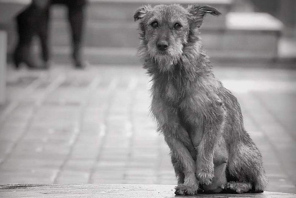 они грустные картинки бездомных животных до слез тут