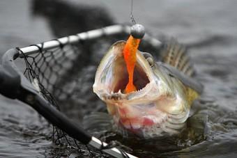 Чемпионат по ловле рыбы спиннингом