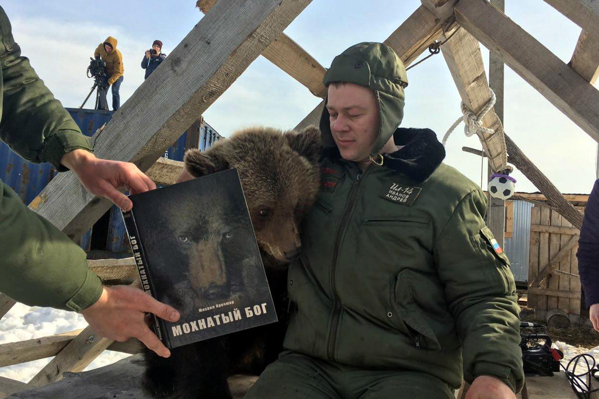 медвежонок мансур