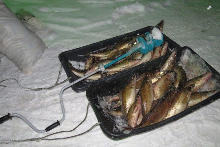 В Пено задержали браконьера с полцентнера рыбы