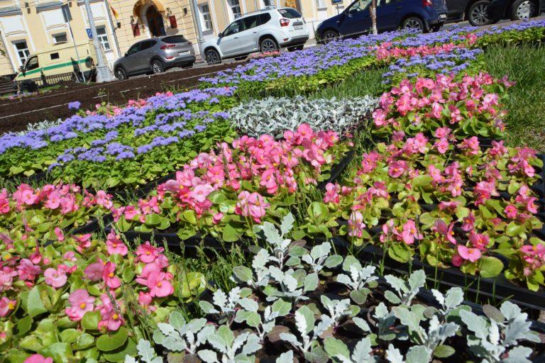 В начале лета в Твери появятся вертикальные конструкции с цветами