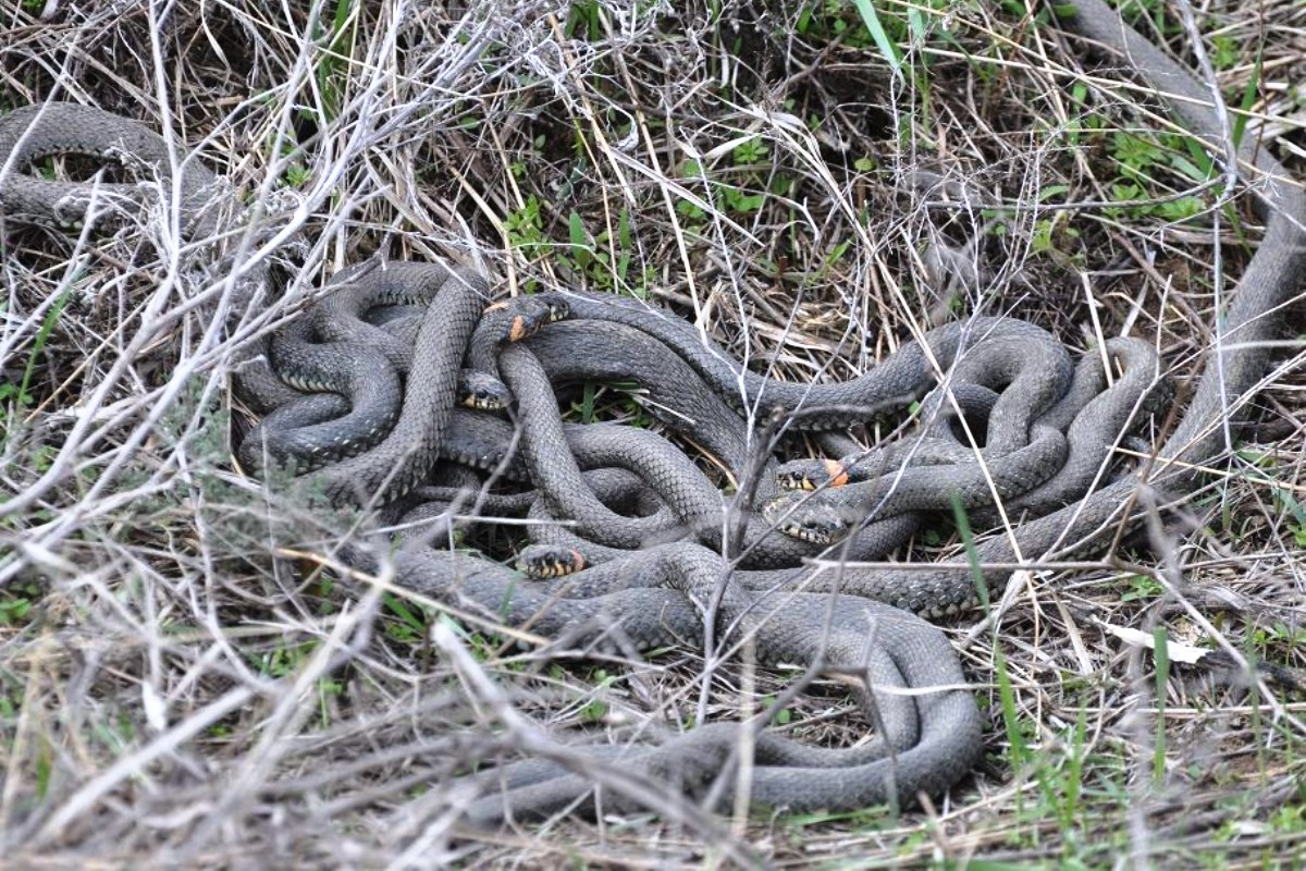 В районе Военного городка в Кимрах очевидцы сняли на видео нашествие змей